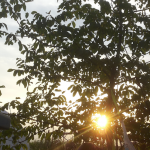 Morgensonne mini